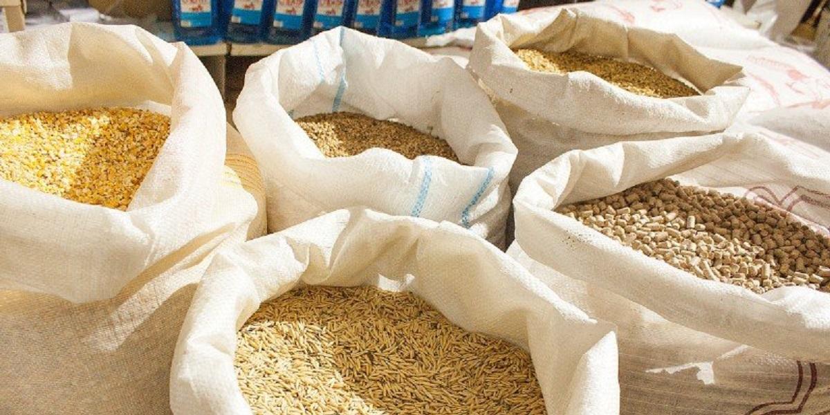 Канада, ГМО-корм, Россельхознадзор