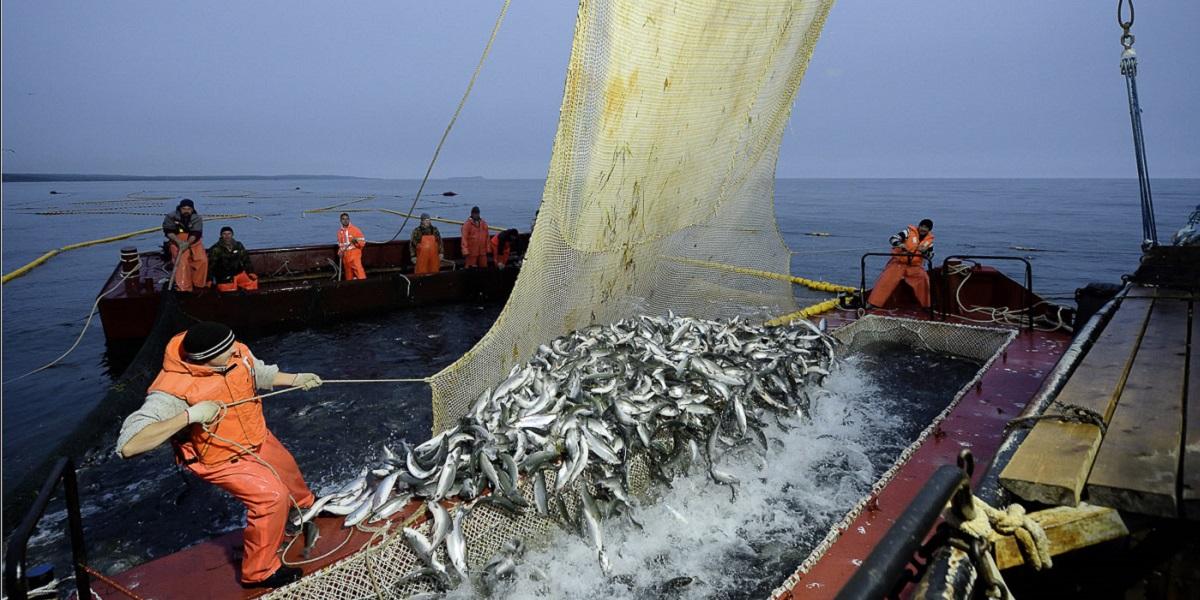 Росрыболовство, Илья Шестаков, экспорт, российская рыба, продвижение за рубежом